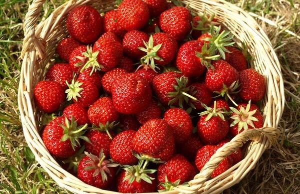 Bio Obst & Gemüse zur Selbsternte