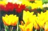 Botanischer Garten Bielefeld - rund um die Uhr geöffnet. Der Eintritt ist!