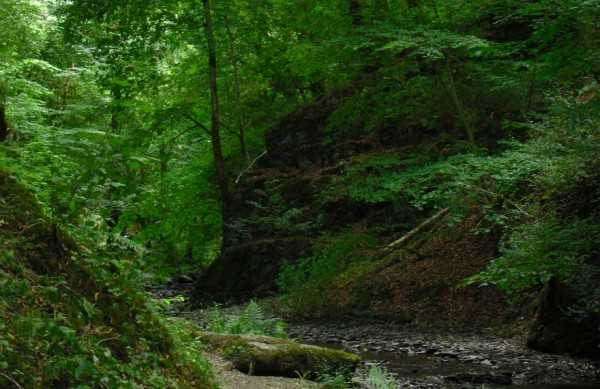 Familien-Wildnis-Abenteuer-Camp im Bergischen Land