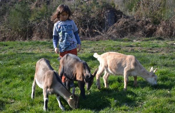 Osterferien-Freizeit auf dem Bioland-Bauernhof