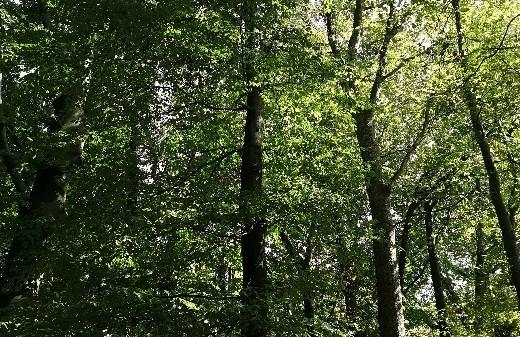 WaldwichtelZeit der Familienbande
