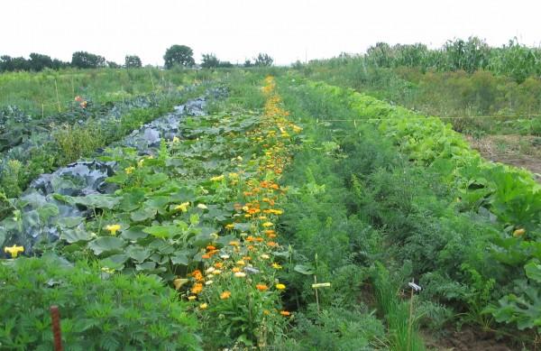 Gartenglück für die ganze Familie: das eigene Bio-Gemüse pflegen & ernten