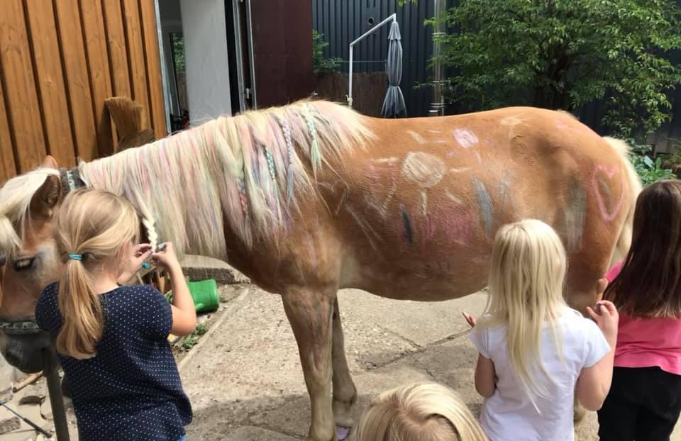 Pony-Geburtstag